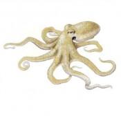 Astoņkāji (5)