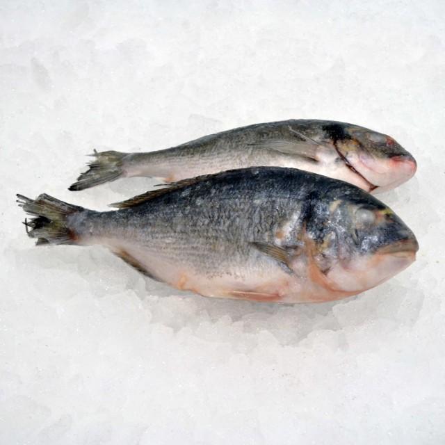 Seabream head on gutted 300/400 gr (10 kg) 20 % Turkey frozen