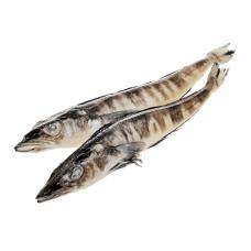 Ice Fish WR, 150- gr,  ~10kg. France