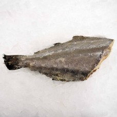 Greenland Halibut HG j/cut 1- kg/pcs Germany ~ 20 kg frozen