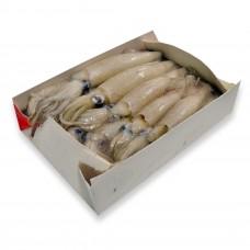 Loligo California squid WR (9-14cm) USA (12x1kg)