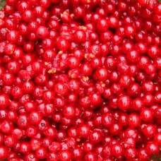 Red currant without steam, Lituania