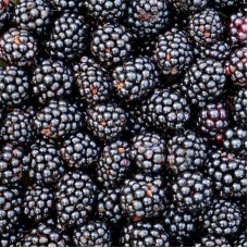 Black berries 1kg, Lithuania