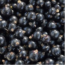 Blackcurrant (4*2,5kg)  Poland